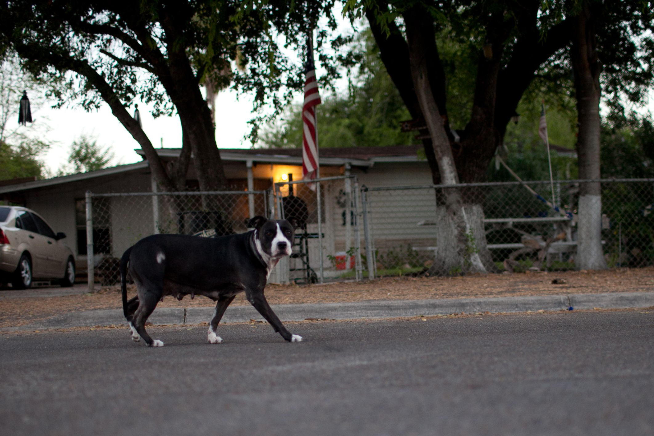 A loose dog, prowls the streets of Lopezville.
